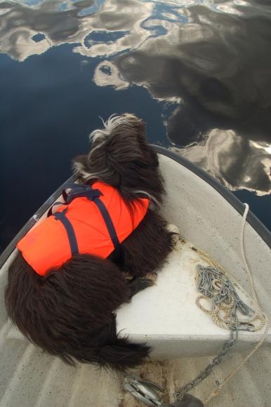 Wilma älskar att åka båt