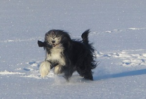 Wilma i snön