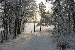 Julen 2012 Äskilt