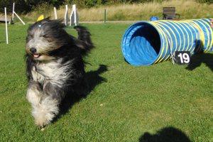 Wilma agility