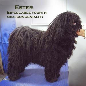 Ester hallandshunden
