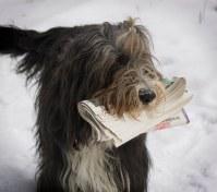Wilma hämtar posten varje dag