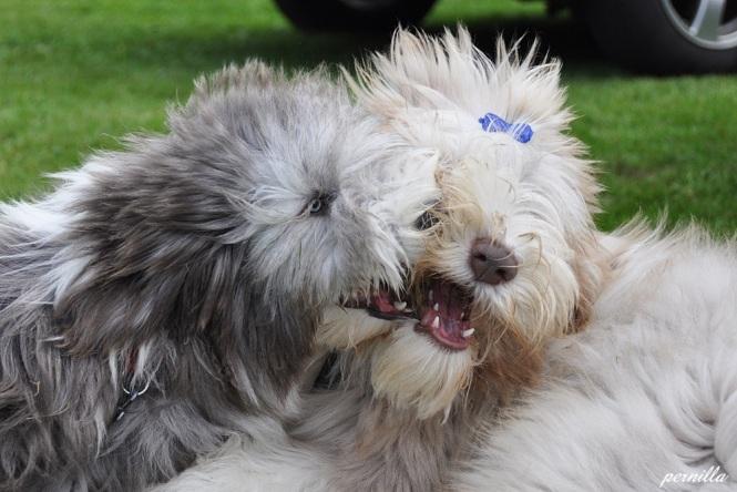 Bailey och Malkin