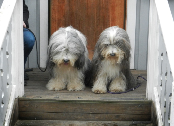 Hebbe och Sally 2