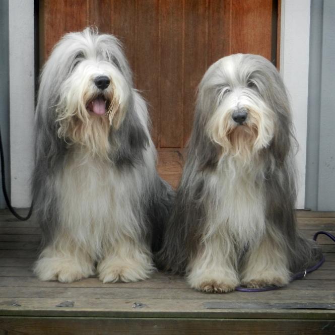 Hebbe och Sally