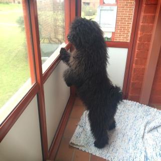 Kafka på balkongen