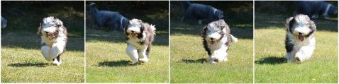Marta running