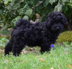 Edith 8 veckor gammal