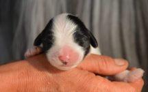 Hane 2 dagar gammal