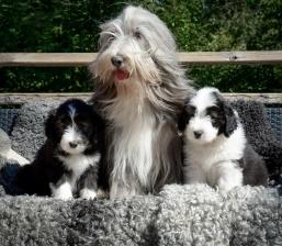Ebba, mamma Nova och Gösta