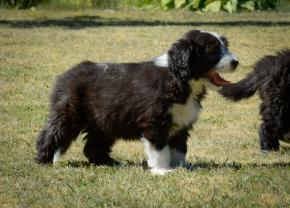 Ebba 8 veckor gammal