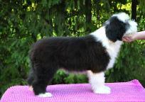 Lucy 12 veckor gammalr