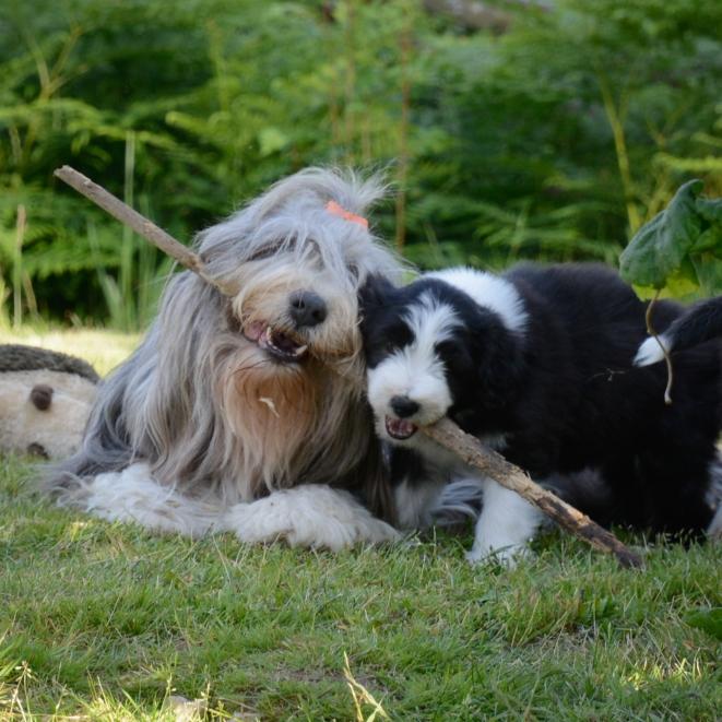 Bonnie med mamma Freya