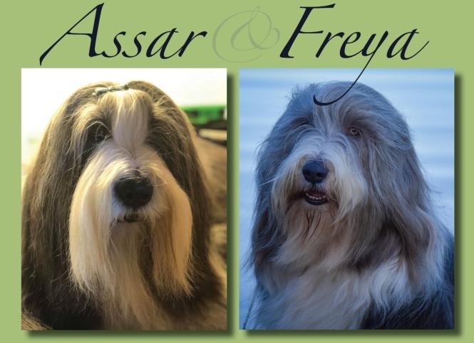 Porträtt på hanen Assar och tiken Freya.