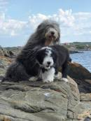 Bonnie bor i Onsala med mamma Freya