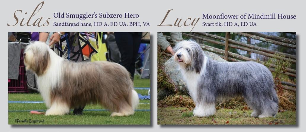 Vallklanen Silas Lucy 2020webben