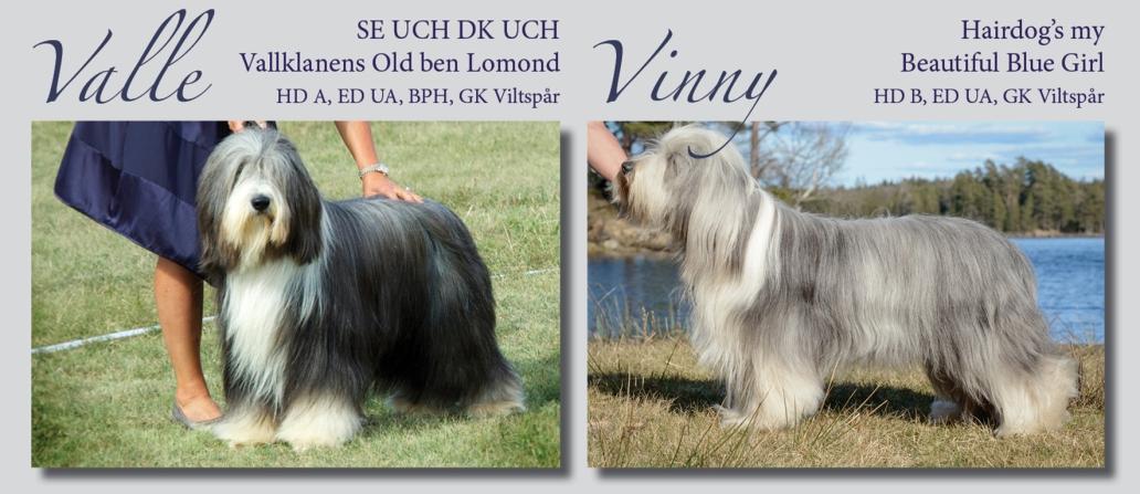 Vallklanen Valle Vinny 2020 webben