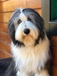 Lucy 1 år