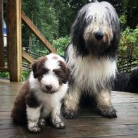 Vega och mamma-Lucy