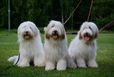 Vega (i mitten) med systrarna Athena (t.v) och Brumma (t.h)
